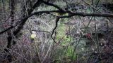 Forest After The Rain stock footage