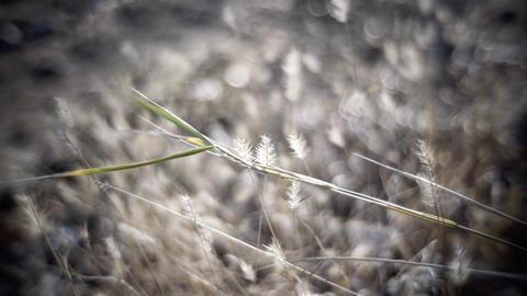 Weeds Stock Video Footage
