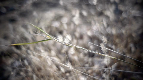 Weeds Footage
