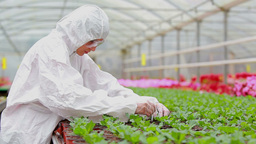 Woman in protective suit checking the plants Footage