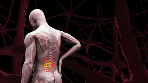 Digital human with highlighted lower back pain Animation
