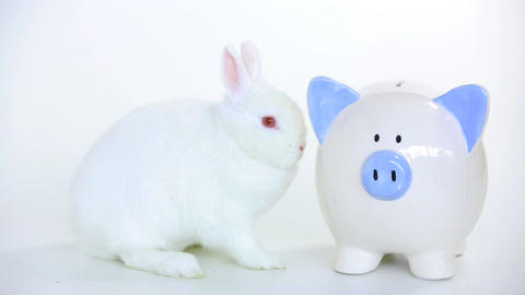 White rabbit beside a piggy bank and someone puts  Footage