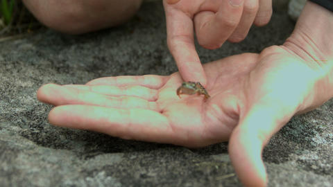 Tiny frog jumping off a hand Footage