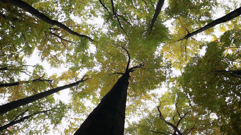 Low angle shot of majestic trees Footage