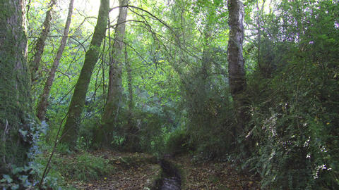 Stream flowing through a wooded area Footage