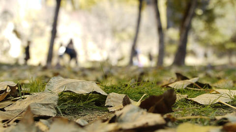 Nature autumn yellow leaf leaves park people walking Stock Video Footage