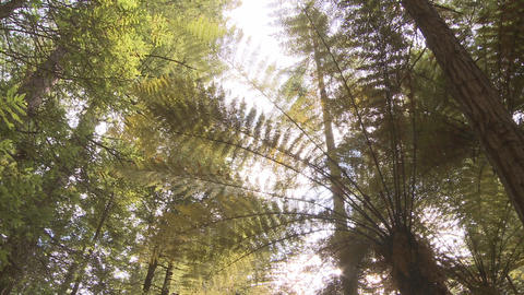 fern and redwoods Footage