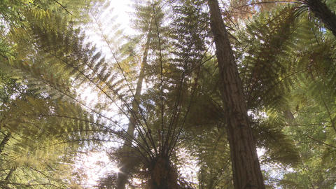 fern and redwoods Stock Video Footage