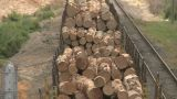 Lumber On Train From Rear stock footage