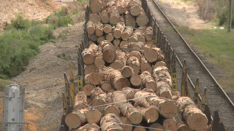lumber on train from rear Footage