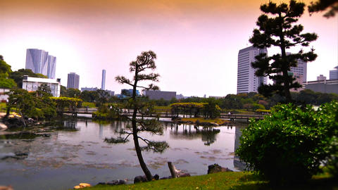 Japanese Garden ARTCOLRED 02 Stock Video Footage