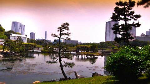 Japanese Garden ARTCOLRED 02 Footage