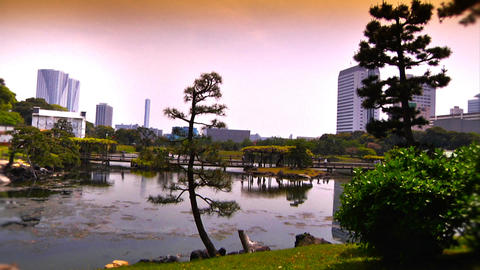 Japanese Garden ARTCOLRED 02 Stock Video Footage