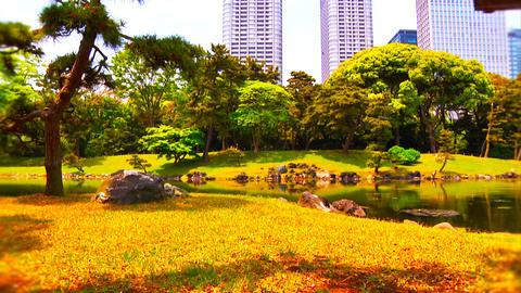 Japanese Garden ARTCOLRED 07 Stock Video Footage