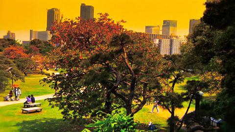 Japanese Garden ARTCOLRED 09 Footage