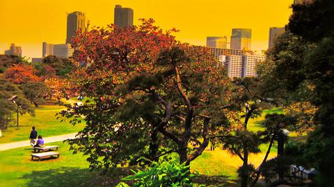 Japanese Garden ARTCOLRED 09 Stock Video Footage