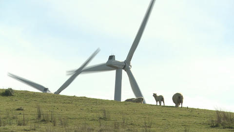 Sheep and wind turbines Footage