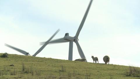 Sheep and wind turbines Footage