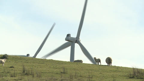 Sheep and wind turbines Stock Video Footage