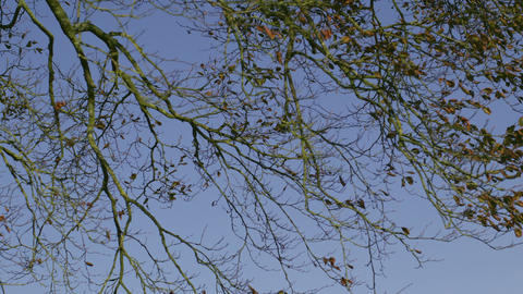 Branches contrasting against blue sky Footage