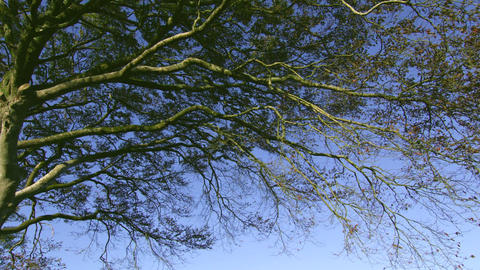 Tree branches contrasting against the blue sky Footage