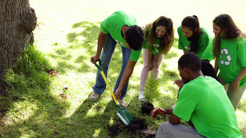 Environmental activists planting a tree in the park Stock Video Footage
