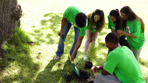 Environmental activists planting a tree in the park Footage