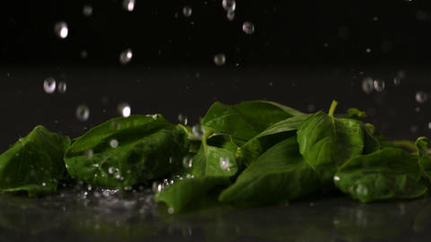 Water dropping onto fresh basil leaves Stock Video Footage