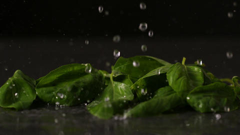 Water dropping onto fresh basil leaves Footage