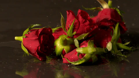 Rose heads falling onto wet black surface Footage