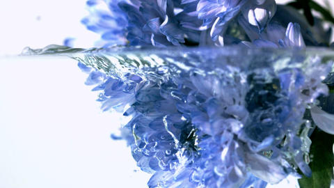 Blue flowers falling into water Footage