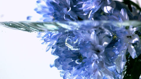 Blue flowers falling into water Stock Video Footage