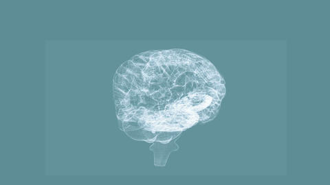 Revolving transparent human brain graphic Animation