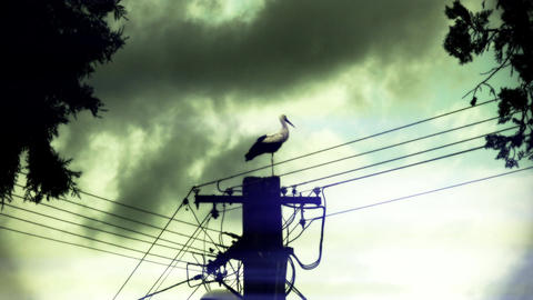 4 K European Stork on Electric Pole 12 stylized Footage