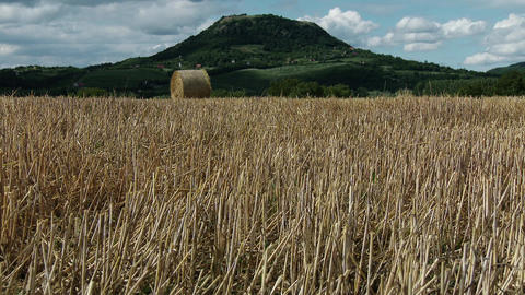 4 K Harvested Grain Stems And Volcanic Hill Summer stock footage