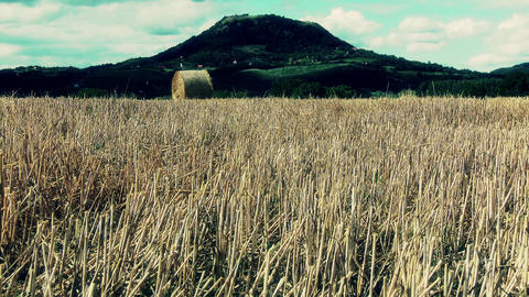 4 K Harvested Grain Stems in Summer and Volcanic H Footage