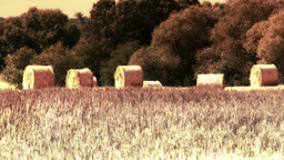 4 K Hay Bales on Harvested Grain Field in Summer H Footage