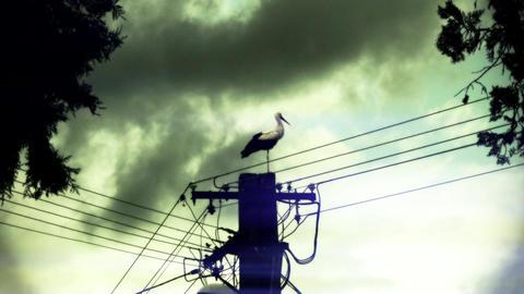European Stork on Electric Pole 12 stylized Footage