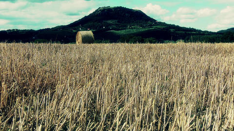 Harvested Grain Stems In Summer And Volcanic Hill stock footage
