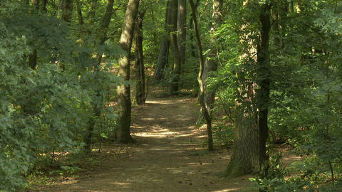 Temperate Climate Lush Deciduous Forest At Summer stock footage