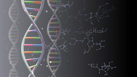 DNA 2 A A1b Animation