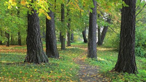 Autumn footpath Stock Video Footage