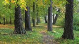 Autumn Footpath stock footage