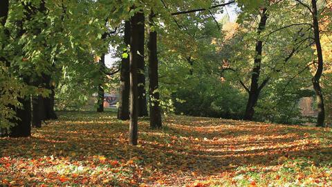 Autumn park Footage
