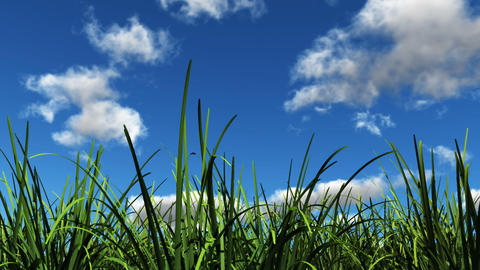 grass in the sunshine Stock Video Footage