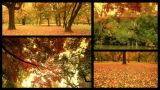 Fall Splitscreen 01 stock footage