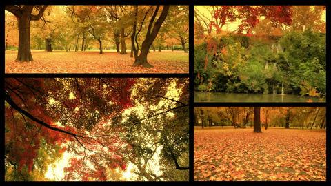 Fall Splitscreen 01 Footage