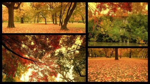 Fall Splitscreen 01 Stock Video Footage