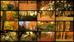 Fall Splitscreen 03 Stock Video Footage