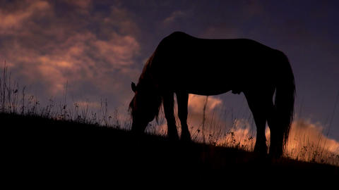 Evening Pasture in the Foothills Footage